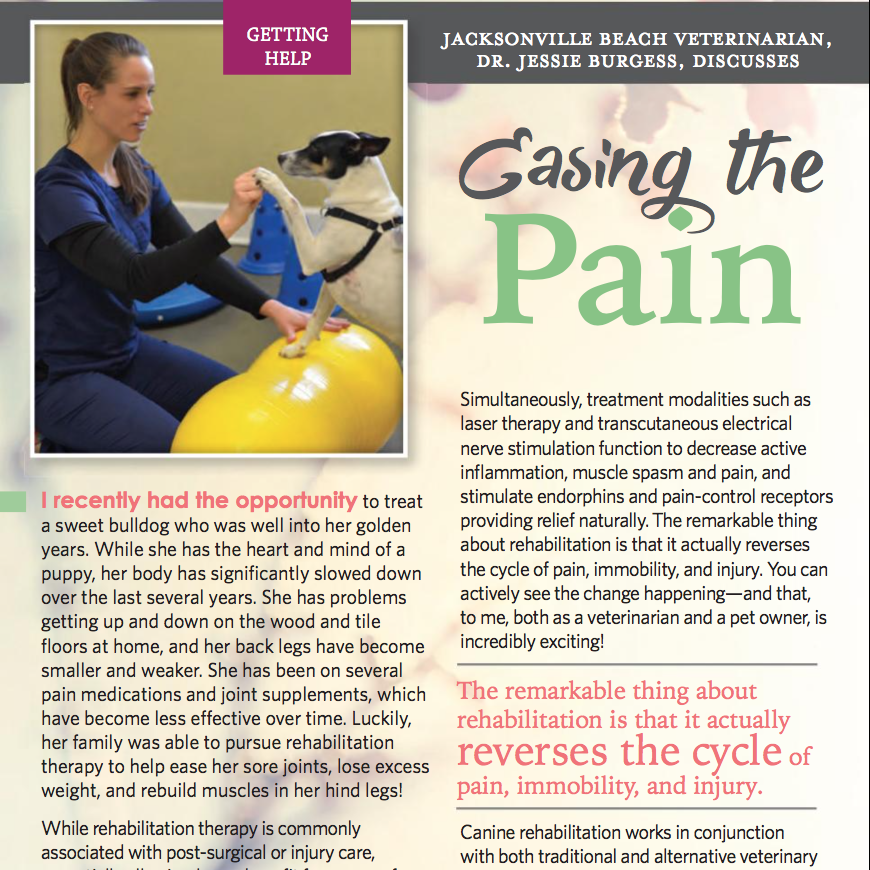 """Easing the Pain"" by Dr. Jessie Burgess in Beach Unleashed Jacksonville Magazine"